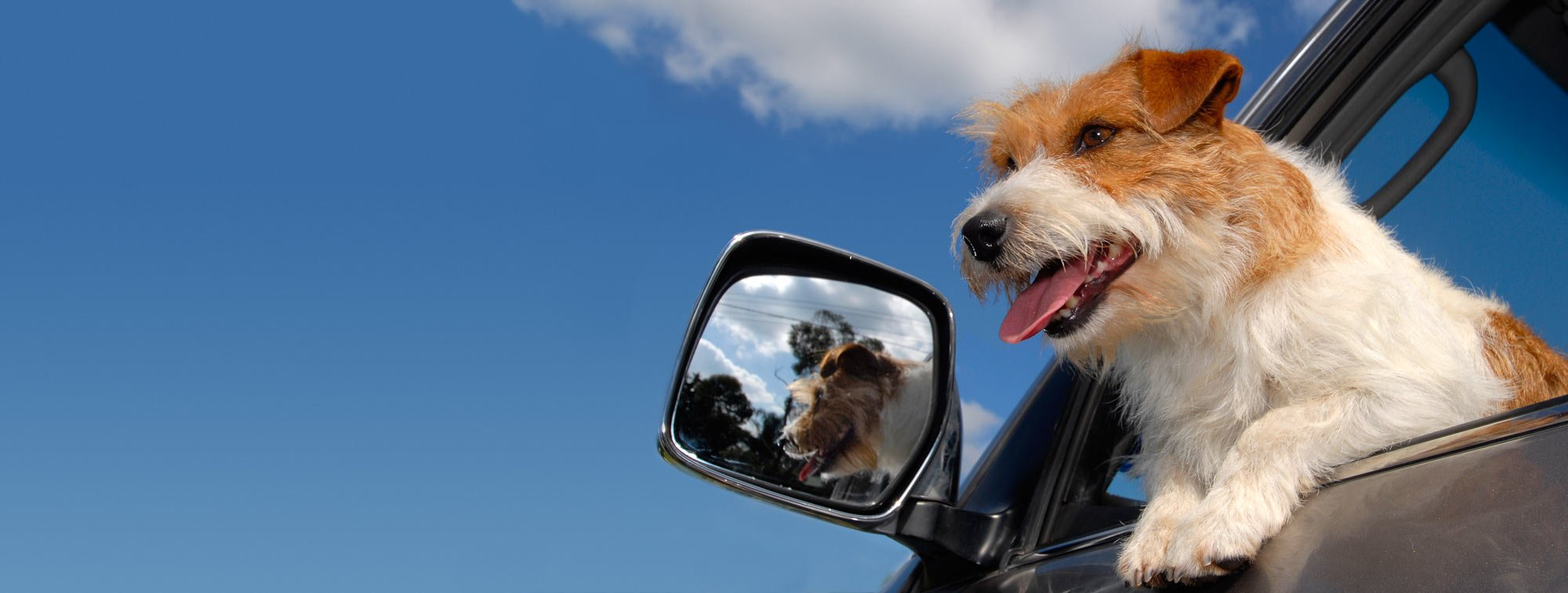 Pet Taxi Service, Boston