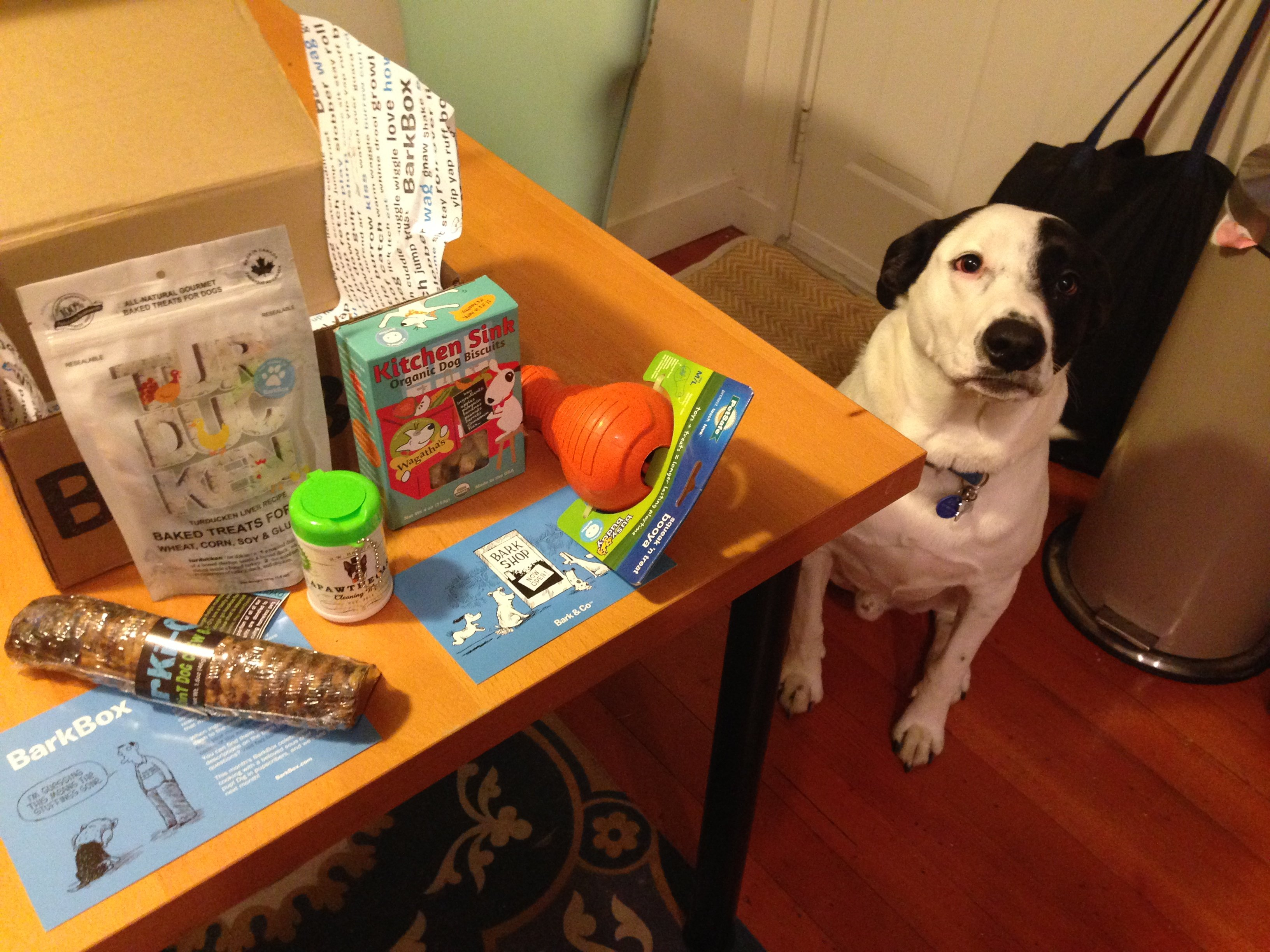 November's BarkBox Review: Be Thankful I Even Wrote This!