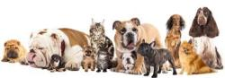 In-home pet sitting for dogs
