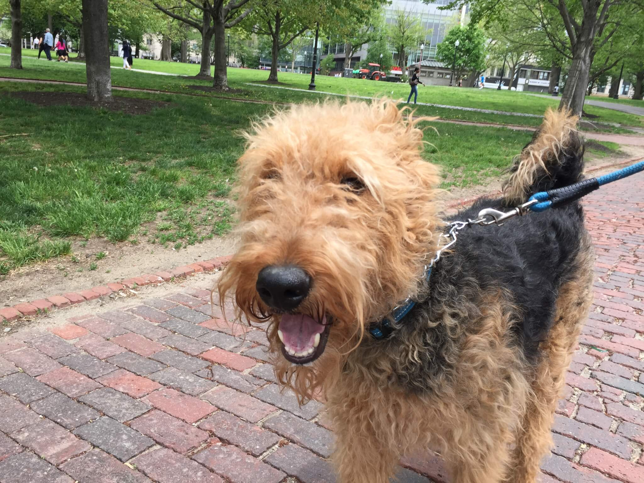 Dog Day Care Boston Area