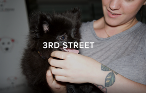 3rd Street Cambridge dog owner's event