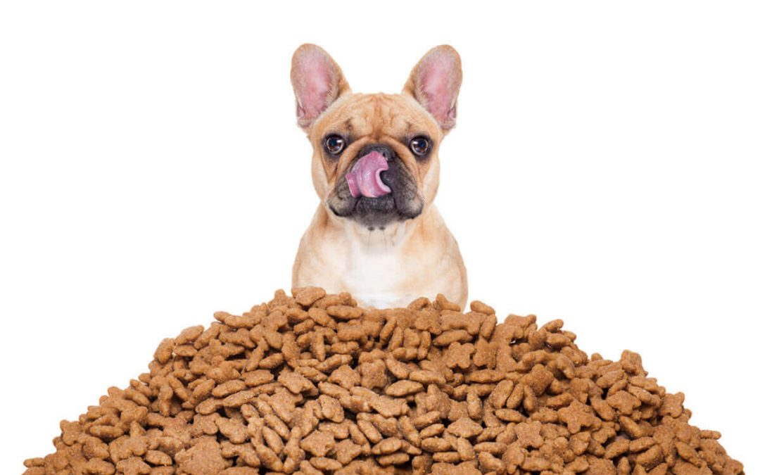 Best Dog Foods…trends, buzzwords, and all!