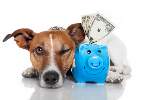 Pet Insurance - What's best for your pet?