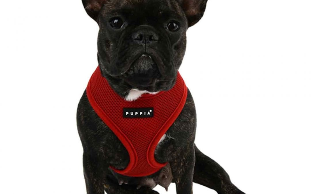 Best Dog Harnesses!
