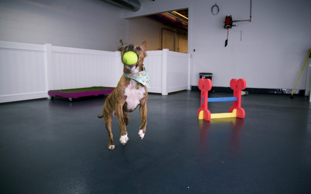 Why Doggie Daycare? Benefits and Advantages