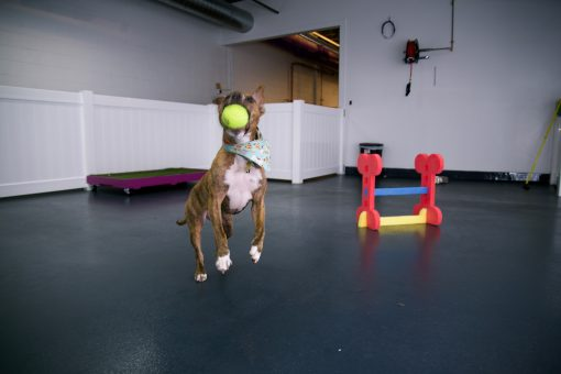 Why Doggie Daycare Benefits And