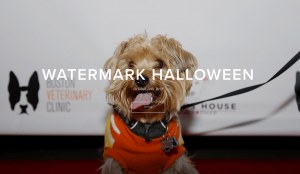 Watermark Halloween Event Photos