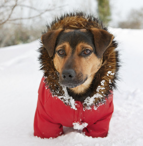 Frosty Paws: How to Best Prepare your Pup for Winter!