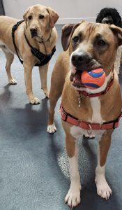 Dog Daycare Boston