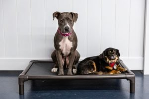 Ruff, Ruff, Rescue: Why to Adopt a Rescue Pup