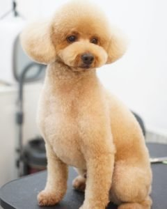 Dog Grooming Pic