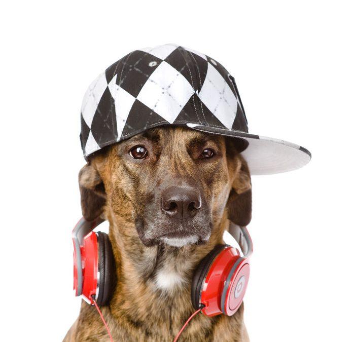 Yappy Music